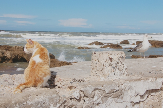 Cat and Seagull
